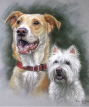 Lab mix and west highland white terrier dog portrait